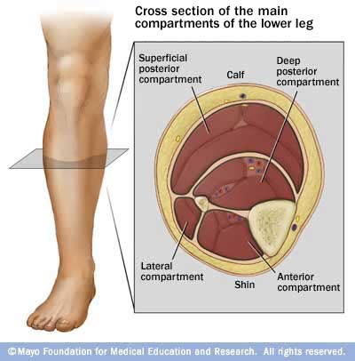how to keep leg muscles healthy